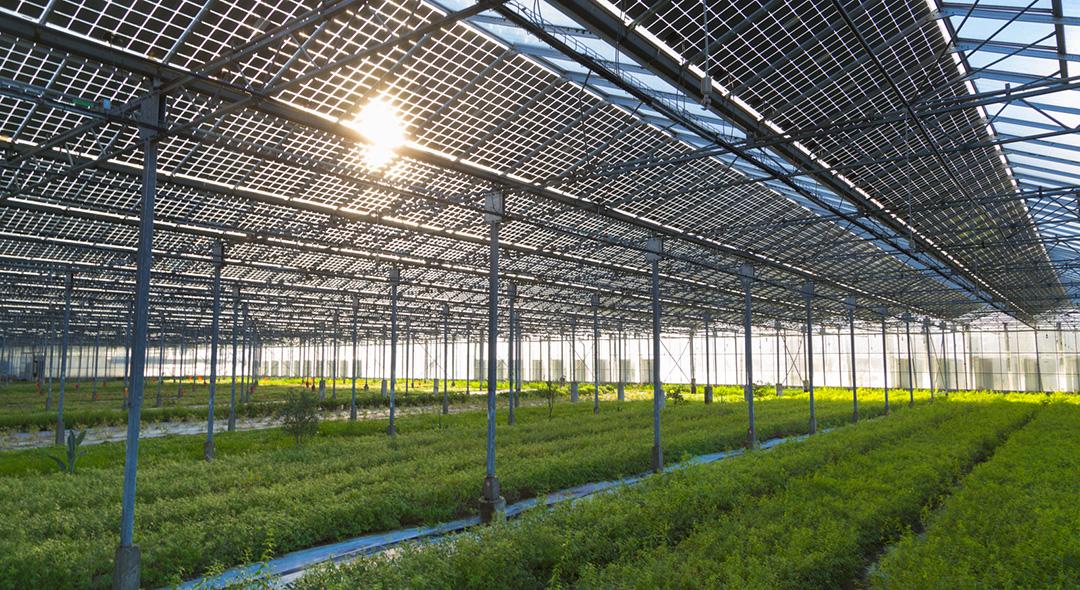 Serres photovoltaïques Cruas Cap Vert Energie